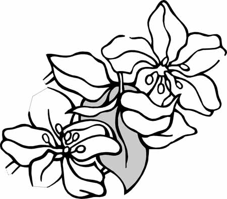 Flores Para Colorear Faciles Dificiles Y Hermosas Colorear Imagenes