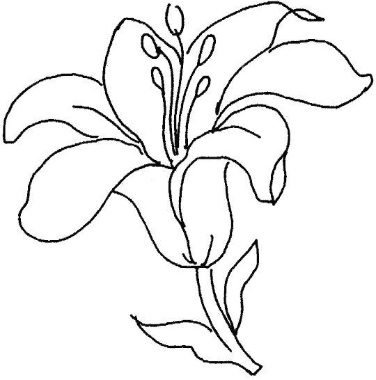Flores para colorear f ciles dificiles y hermosas colorear im genes - Plantillas para dibujar en la pared ...
