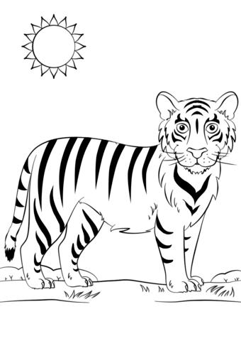 Dibujos De Tigres Para Colorear Descargar E Imprimir